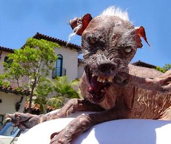 La mort du chien le plus laid au monde !