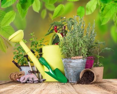 5 engrais naturels qu'on retrouve dans toutes les maisons
