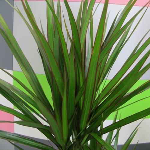 Les 9 plantes d 39 int rieures qui purifient l 39 air de la maison - Plante qui purifie l air ...