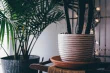 9 plantes d'intérieures qui purifient l'air de la maison