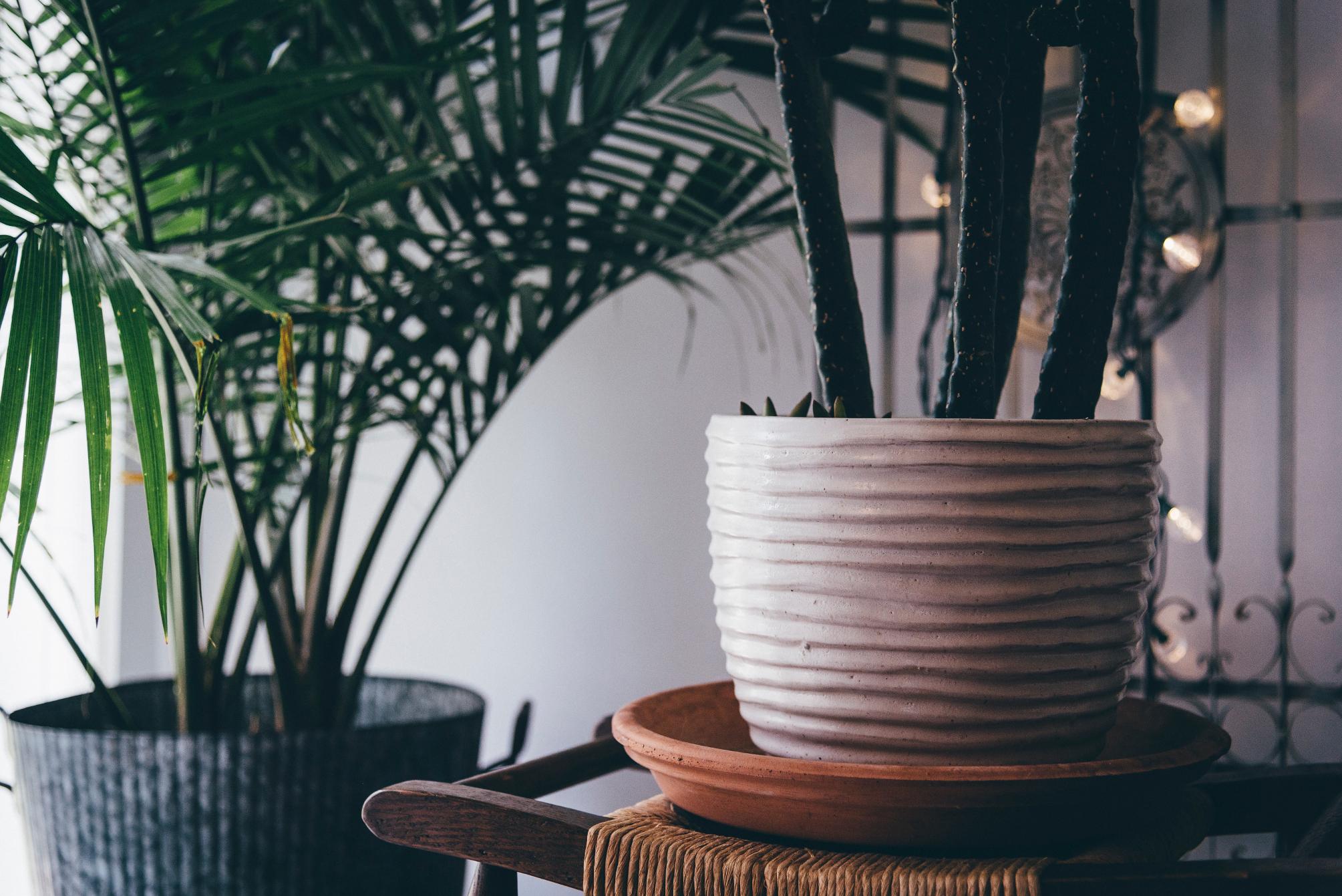 Les 9 plantes d 39 int rieures qui purifient l 39 air de la maison for Plante verte exterieure