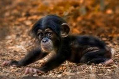 26 photos de bébés animaux très mignons pour vous remonter le moral